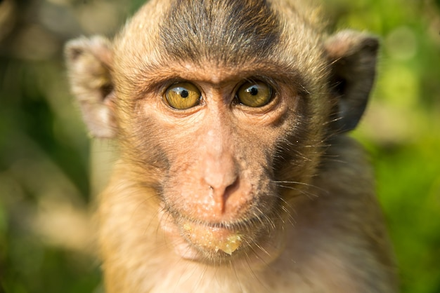 Portret małpy na wolności