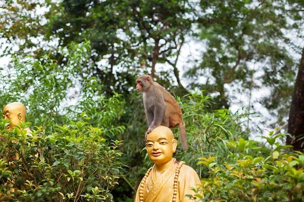 Portret małpy siedzi na głowie posąg mnicha