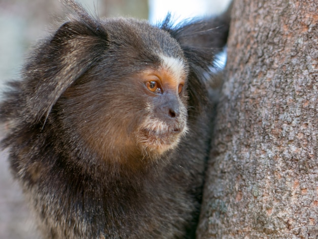 Portret marmozety