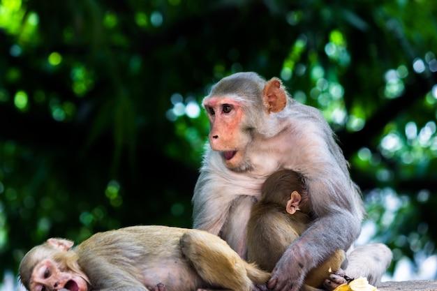 Portret matki małpy w dzikiej przyrodzie siedzącej pod drzewem przytulającym się ze swoją małą małpką
