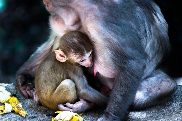 Portret matki małpy w dzikiej przyrodzie siedzącej pod drzewem przytulał swoją małą małpkę w tropikalnym lesie
