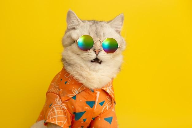 Portret miauczącego białego kota brytyjskiego w okularach przeciwsłonecznych i koszuli na żółtej ścianie