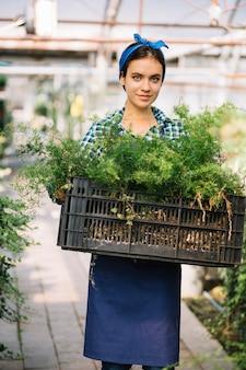 Portret młoda żeńska ogrodniczki mienia skrzynka z świeżymi roślinami w szklarni