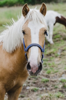 Portret młodego konia oglądania.