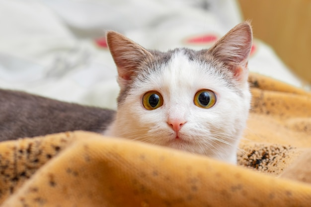 Portret młodego kota leżącego w łóżku