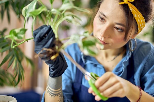 Portret młodej kobiety ogrodniczki patrzącej na skupienie podczas przycinania przesadzania roślin domowych w