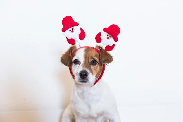 Portret młody śliczny pies jest ubranym santa diadem. koncepcja bożego narodzenia