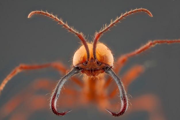 Portret mrówki z długą szczęką. makrofotografia