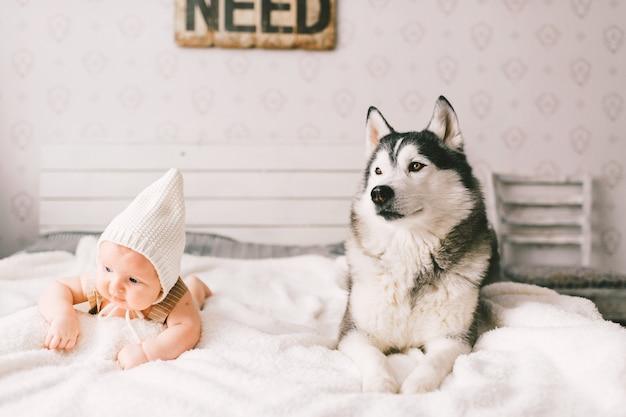 Portret noworodka styl życia leżącego na plecach wraz z husky szczeniaka na łóżku w domu. przyjaźń małego dziecka i uroczego psa husky. uroczy dziecięcy śmieszny dziecko odpoczywa z zwierzęciem domowym w nakrętce.
