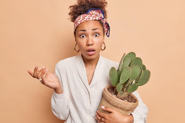 Portret oburzonej, zdziwionej kobiety etnicznej zdezorientował wyraz twarzy, wzruszając ramionami, wpatrując się w przód, trzymając doniczkowy kaktus nosi chustkę zawiązaną przez głowę białą koszulę na białym tle nad brązową ścianą