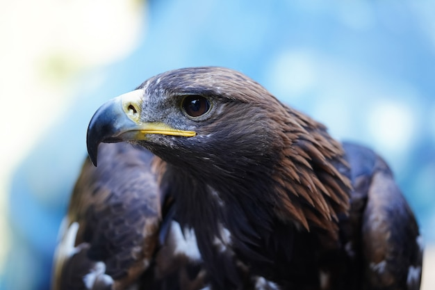 Portret orła. piękny ptak drapieżny. zdjęcie wysokiej jakości