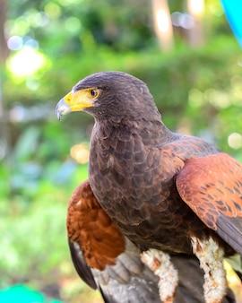 Portret orła siedzącego na patyku symbol polowania
