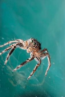 Portret pająka super makro