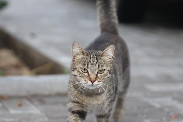 Portret pasiastego kota domowego pozującego w słoneczny dzień na świeżym powietrzu