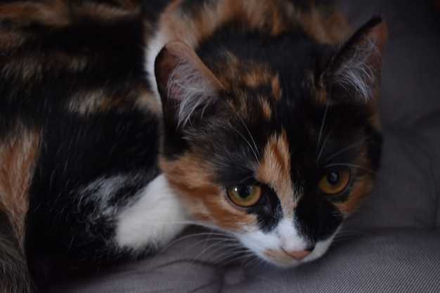 Portret pięknego kota w domu