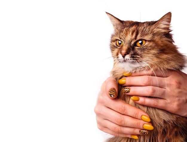 Portret pięknego kota, zbliżenie, na białym tle. ręce z jasnym żółtym manicure'em. projektowanie paznokci.