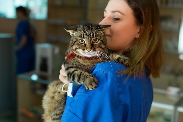 Portret pięknego lekarza weterynarii trzymającego młodego kota w klinice.
