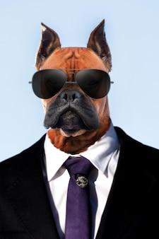 Portret pięknej rasy psów bokser na jasnoniebieskim niebie w garniturze i ciemnych okularach przeciwsłonecznych.