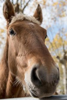 Portret piękny dziki koń