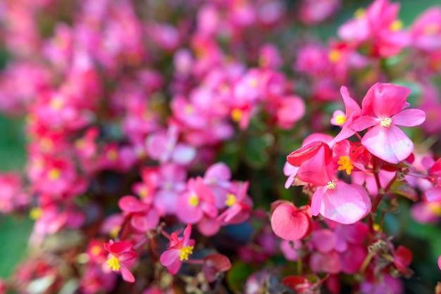 Portret pięknych kwiatów na zewnątrz w przyrodzie w turku w finlandii