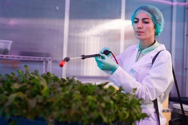 Portret pracownika płci żeńskiej rozpylania nawozu na rośliny zielone w szklarni bio laboratorium lub przedszkola, miejsce na kopię