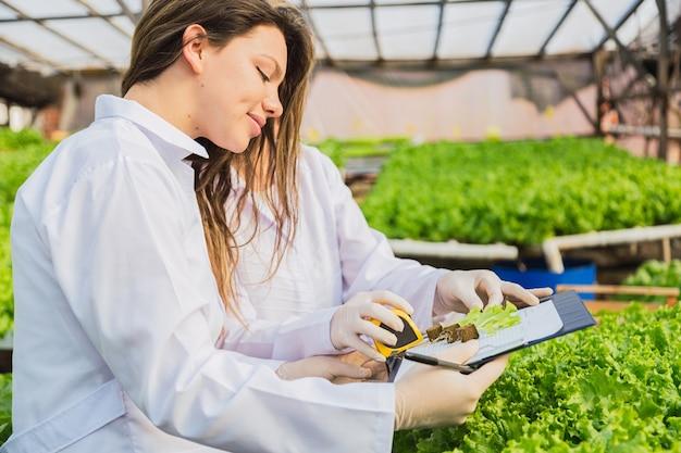 Portret profesjonalistów pracujących w hydroponicznym ogrodzie sałatowym