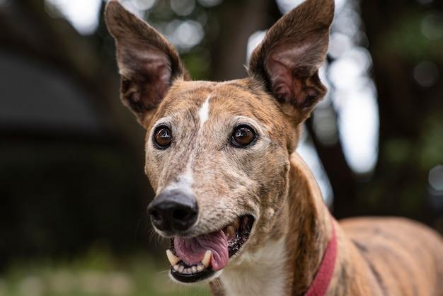 Portret psa charta