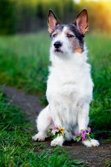 Portret psa na zielonej łące, lato. kwiaty w łapach. słodki zwierzak latem. fotografia pionowa
