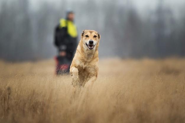 Portret psa rasy mieszanej czerwony działa