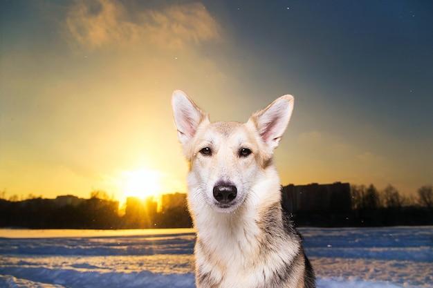 Portret psa rasy mieszanej na spacerze w zimie