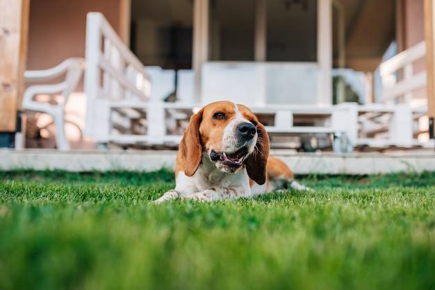 Portret psa w ogrodzie.