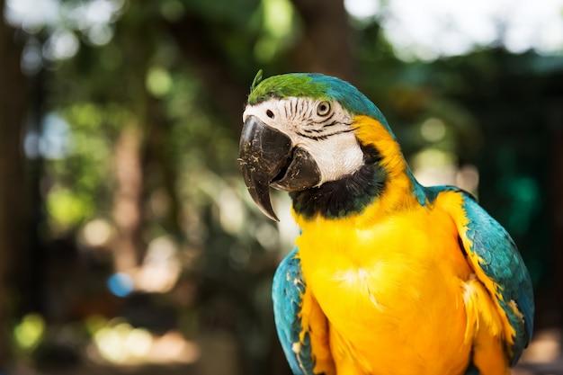 Portret ptaka papuga ara w parku