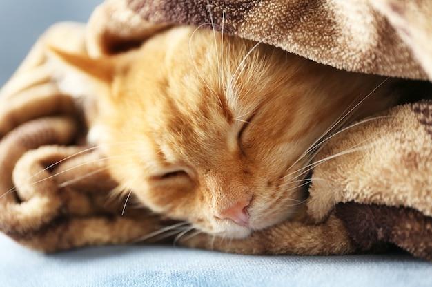Portret puszysty czerwony kot na kanapie z brązową kratę, z bliska
