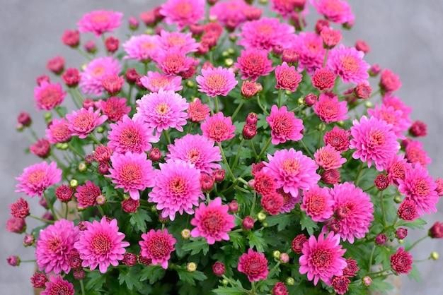Portret różowe kwiaty kwitnące w przyrodzie