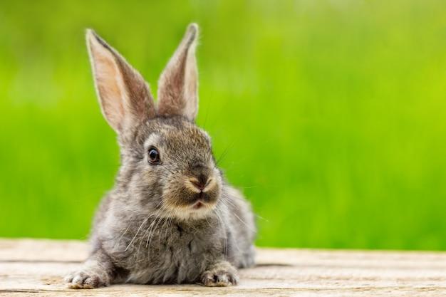 Portret ślicznego puszystego szarego królika z uszami na naturalnej zieleni