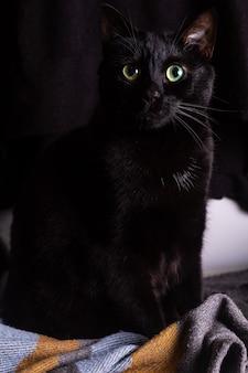Portret śliczny europejski krótkowłosy czarny kot zielone i niebieskie oczy na kocu