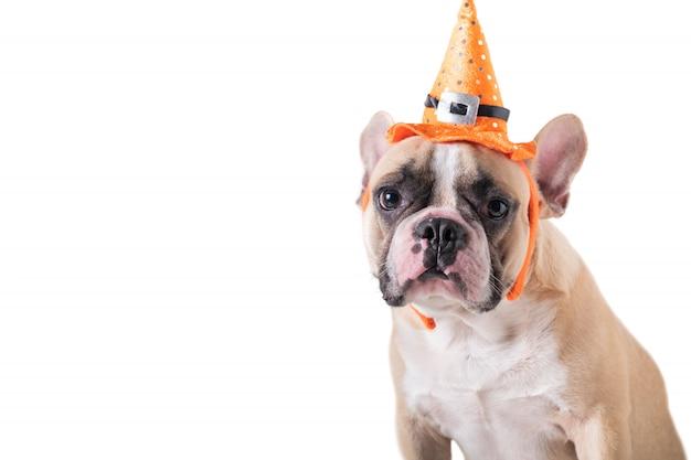 Portret śliczny francuski buldog z kapeluszowym halloween odizolowywającym