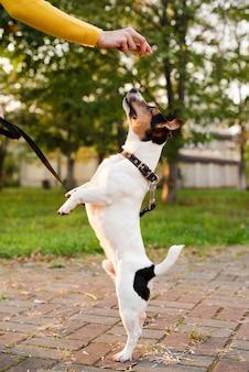 Portret śliczny małego psa bawić się