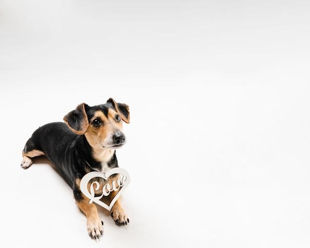 Portret śliczny mały pies z kopii przestrzenią