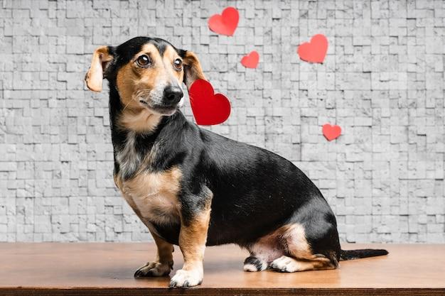Portret śliczny mały zwierzę domowe otaczający sercami