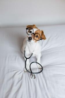 Portret śliczny młody małego psa obsiadanie na łóżku. noszenie stetoskopu i okularów. wygląda jak lekarz lub weterynarz.