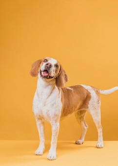 Portret śliczny pies wystaje jego język