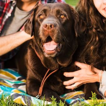 Portret śliczny pies z usta otwartym