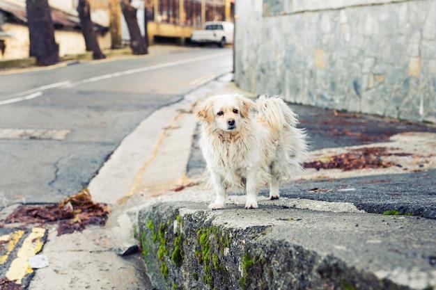Portret smutnego bezdomnego psa