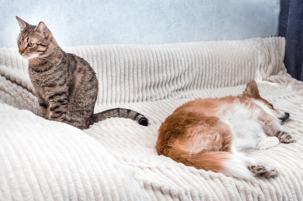 Portret śpiącego psa i kota siedzącego obok niej. koncepcja przyjaźni kota i psa
