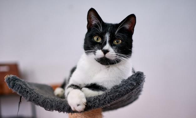 Portret srokatego puszystego kota relaksującego się na wieży kota
