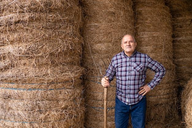 Portret starszego rolnika, trzymając widły i stojąc przy siano w gospodarstwie, biorąc pożywienie dla zwierząt domowych.