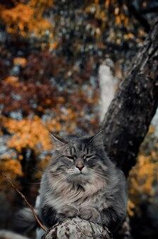 Portret szarego kota na drzewie
