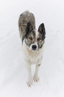 Portret szarość jest prześladowanym outdoors na śniegu