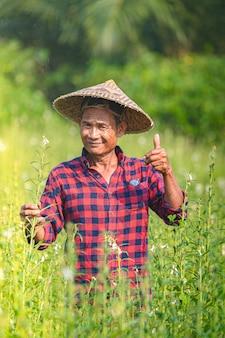 Portret szczęśliwy starszy azjatycki rolnik w sesame garden.